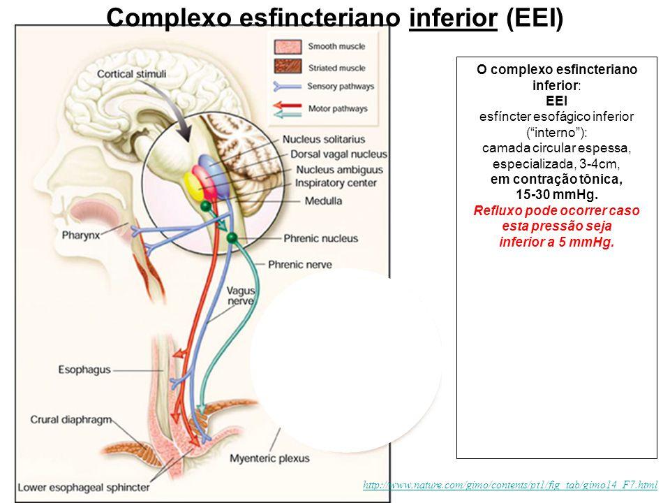 Complexo esfincteriano inferior (EEI)