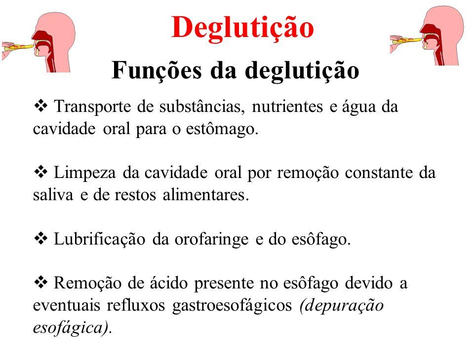Deglutição Funções da deglutição