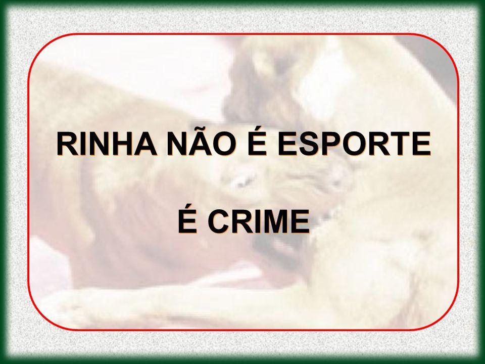 RINHA NÃO É ESPORTE É CRIME