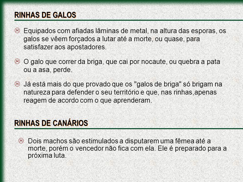 RINHAS DE GALOS RINHAS DE CANÁRIOS