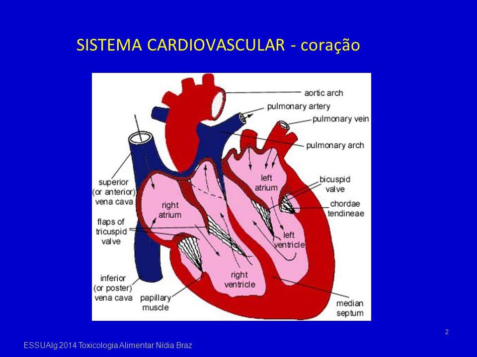 SISTEMA CARDIOVASCULAR - coração