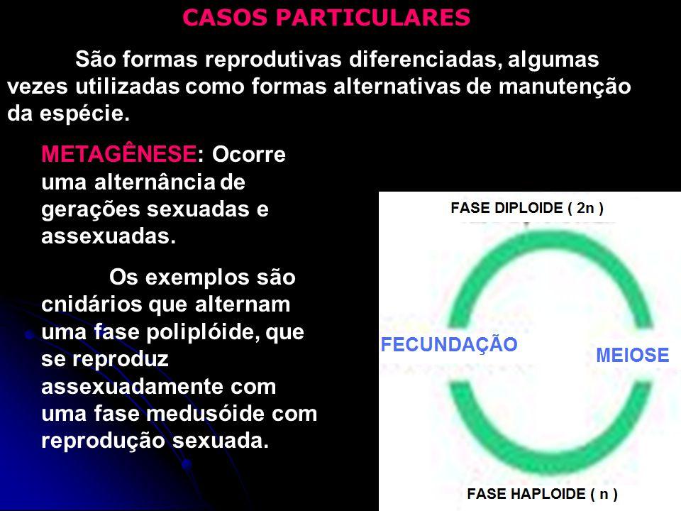 CASOS PARTICULARES São formas reprodutivas diferenciadas, algumas vezes utilizadas como formas alternativas de manutenção da espécie.