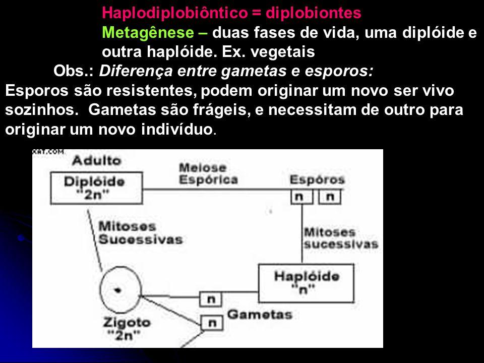 Haplodiplobiôntico = diplobiontes