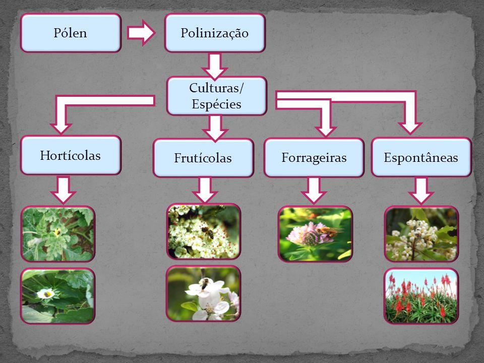 Pólen Polinização Culturas/ Espécies Hortícolas Frutícolas Forrageiras Espontâneas