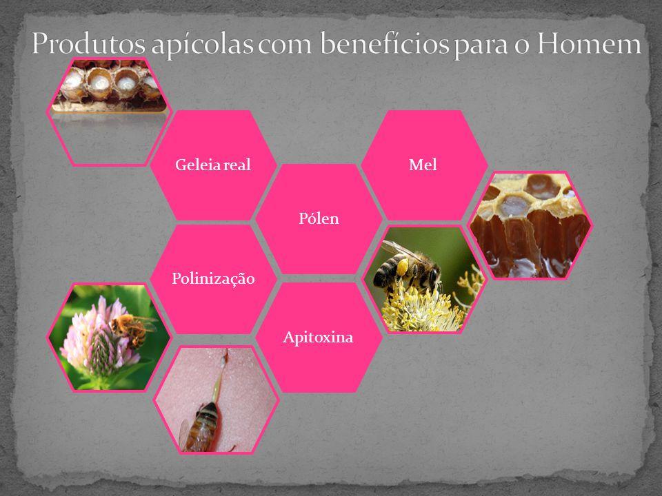Produtos apícolas com benefícios para o Homem