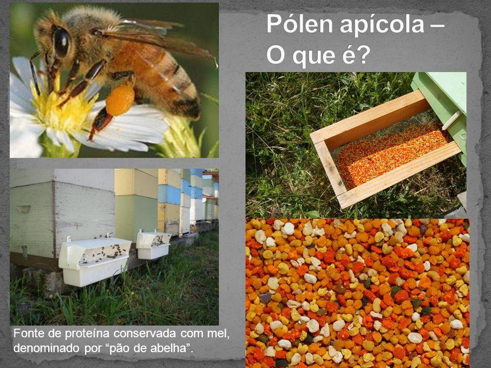 Pólen apícola – O que é Fonte de proteína conservada com mel, denominado por pão de abelha .