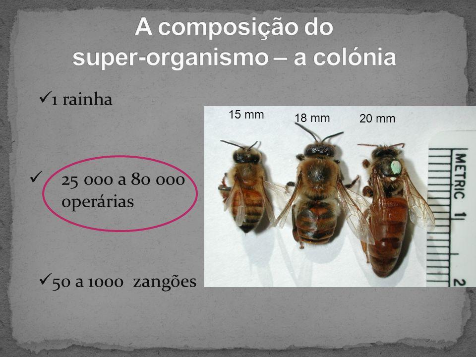 A composição do super-organismo – a colónia