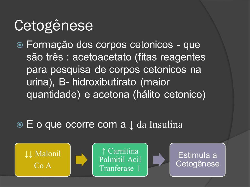 ↑ Carnitina Palmitil Acil Tranferase 1
