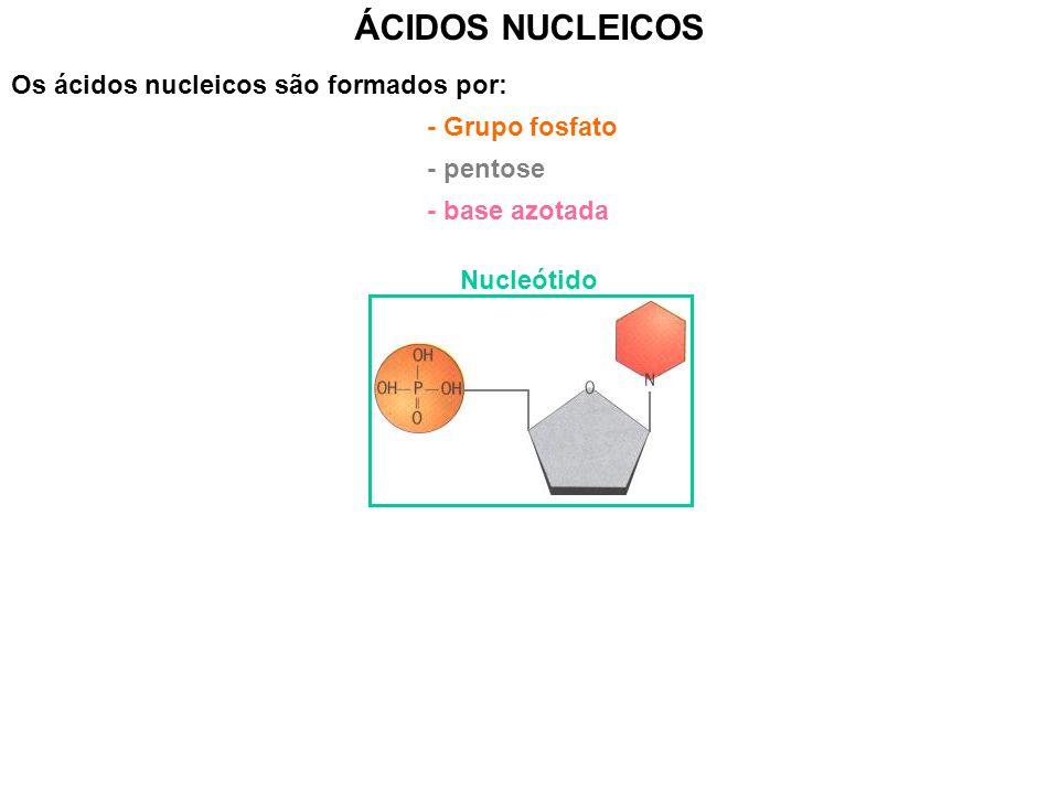 ÁCIDOS NUCLEICOS Os ácidos nucleicos são formados por: - Grupo fosfato