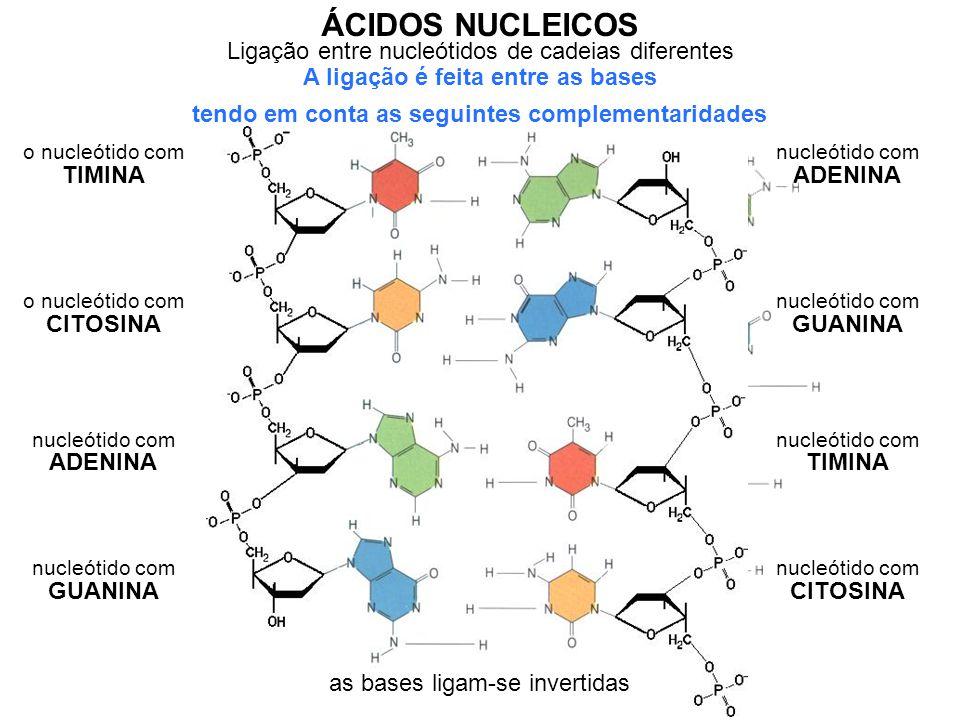 ÁCIDOS NUCLEICOS Ligação entre nucleótidos de cadeias diferentes