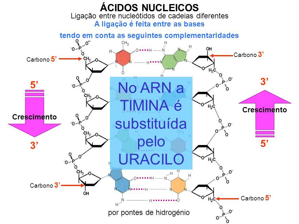 No ARN a TIMINA é substituída pelo URACILO