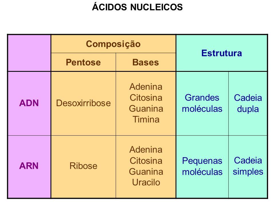 Diferenças entre as moléculas de ADN e ARN