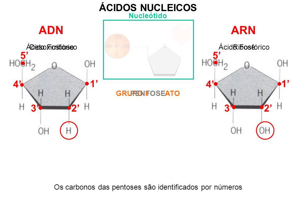 Os carbonos das pentoses são identificados por números