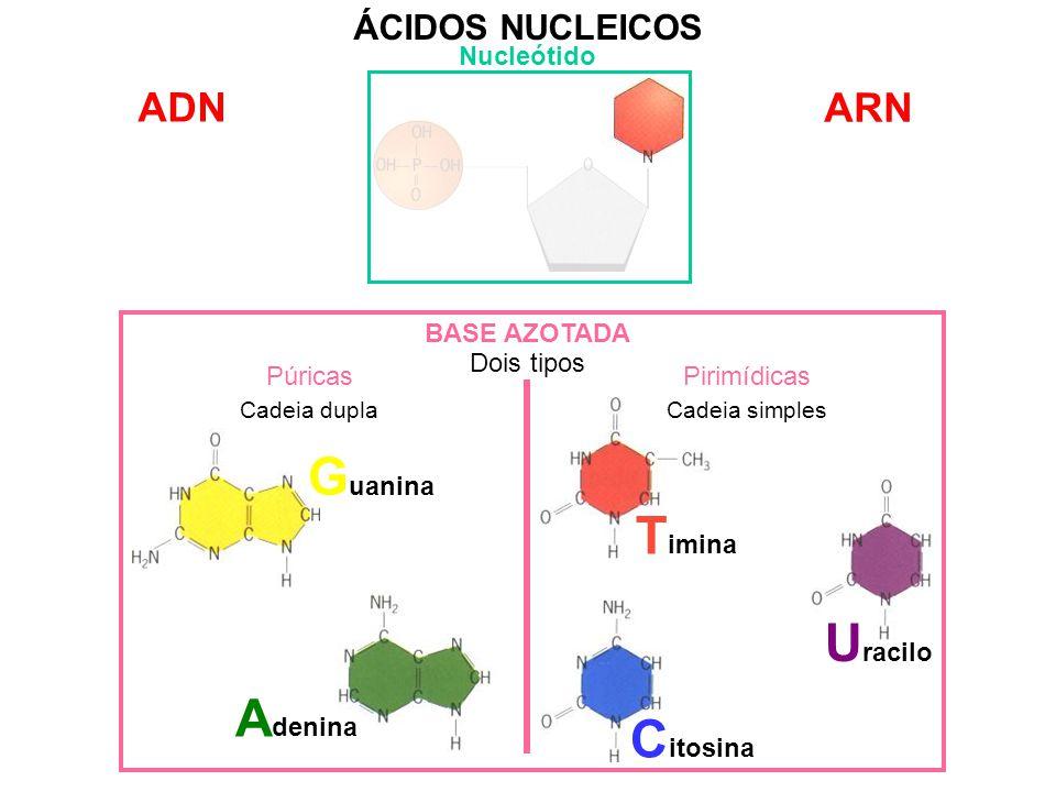 Guanina Timina Uracilo Adenina Citosina ADN ARN ÁCIDOS NUCLEICOS
