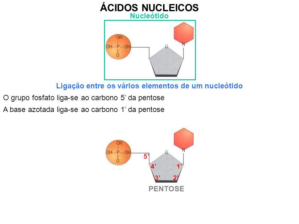 Ligação entre os vários elementos de um nucleótido