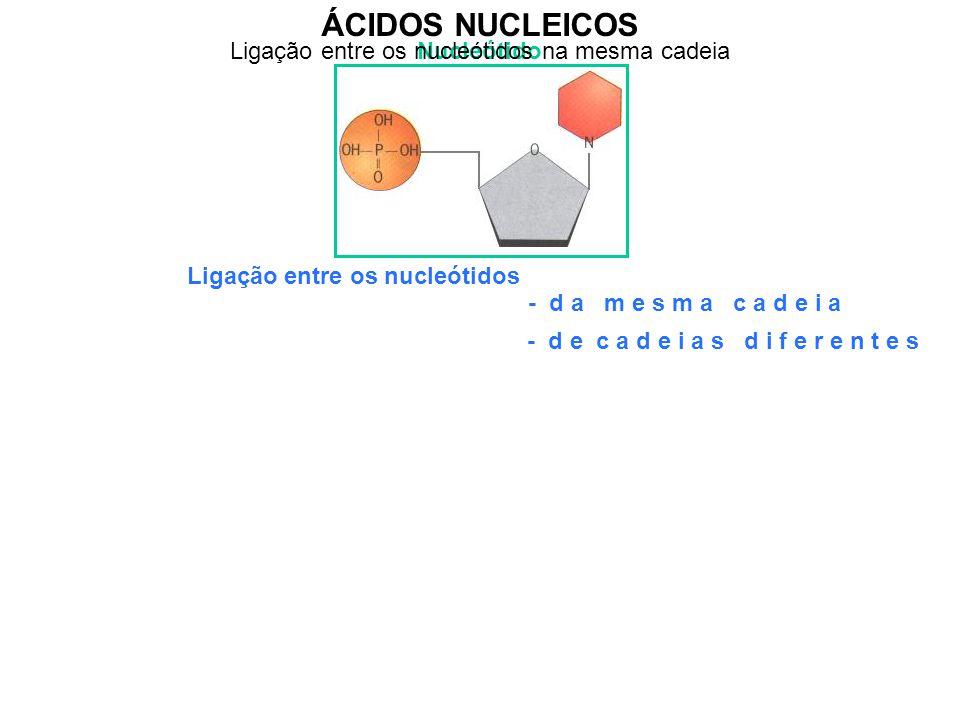 Ligação entre os nucleótidos na mesma cadeia