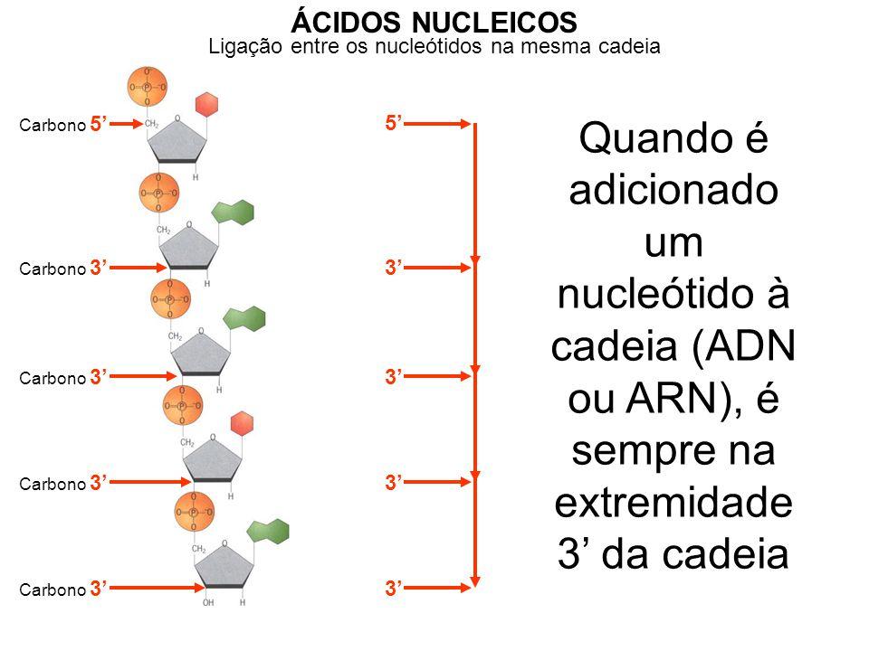 ÁCIDOS NUCLEICOS Ligação entre os nucleótidos na mesma cadeia. Carbono 5' 5'