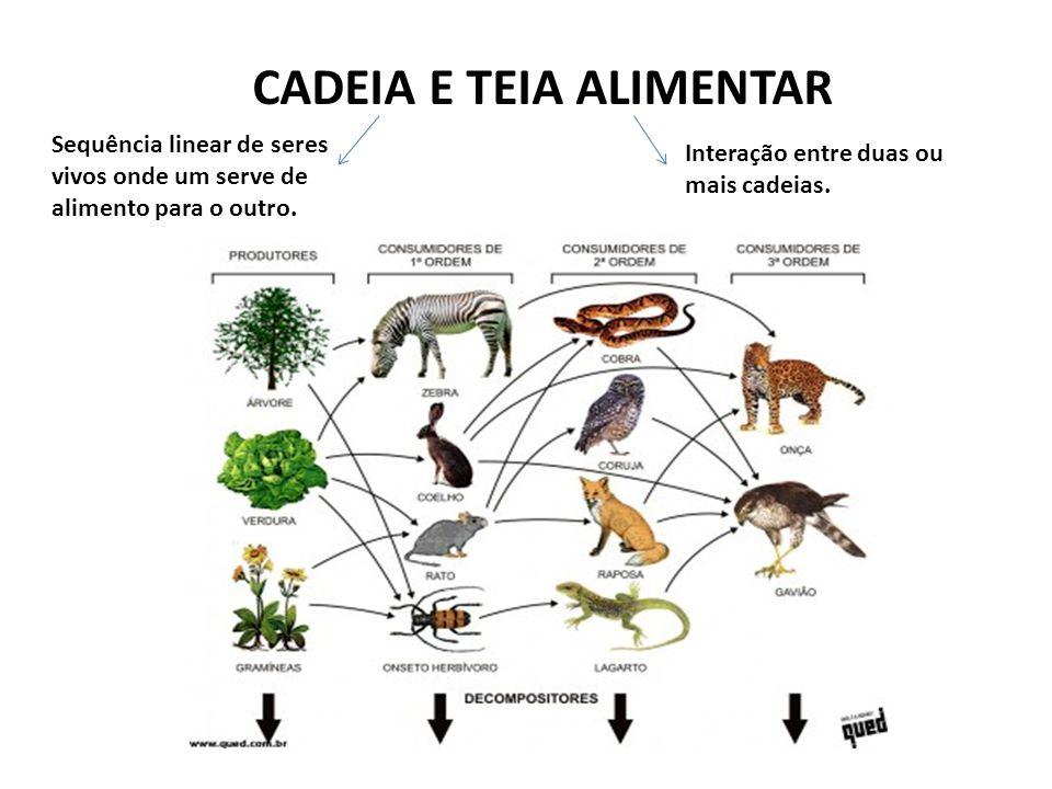 CADEIA E TEIA ALIMENTAR
