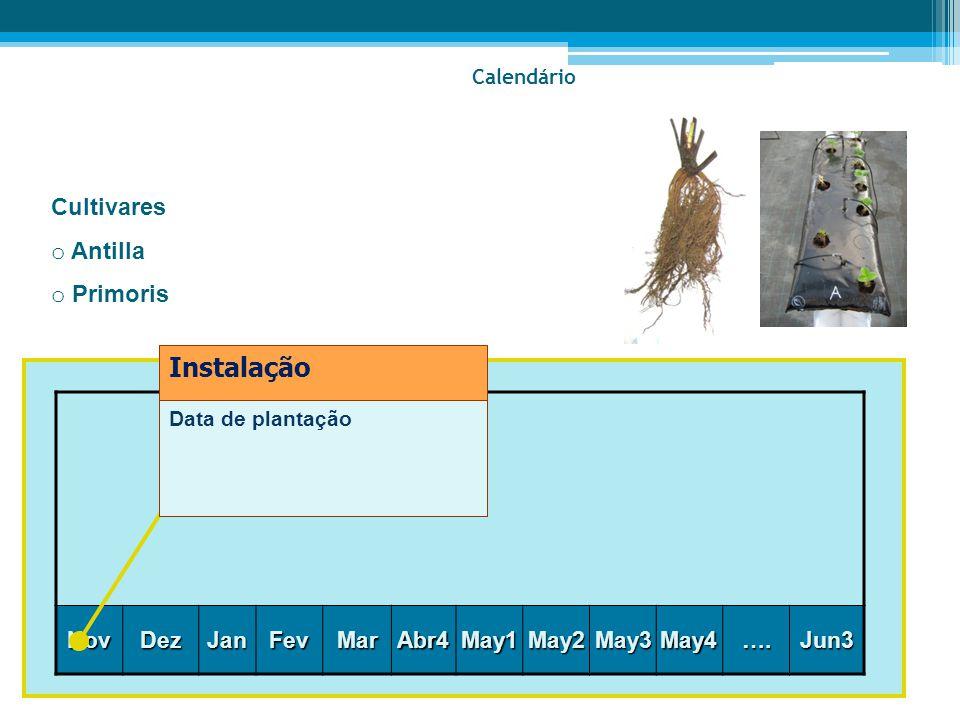 Instalação Cultivares Antilla Primoris Nov Dez Jan Fev Mar Abr4 May1