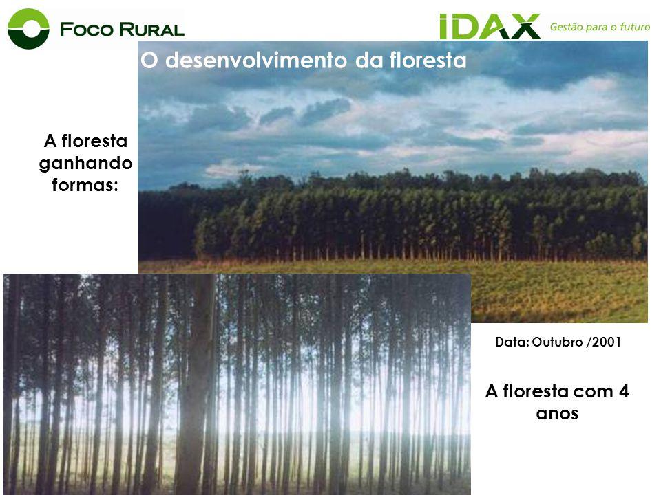 O desenvolvimento da floresta A floresta ganhando formas: