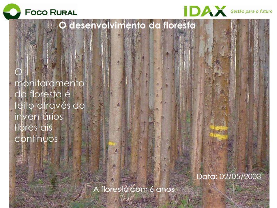 O desenvolvimento da floresta