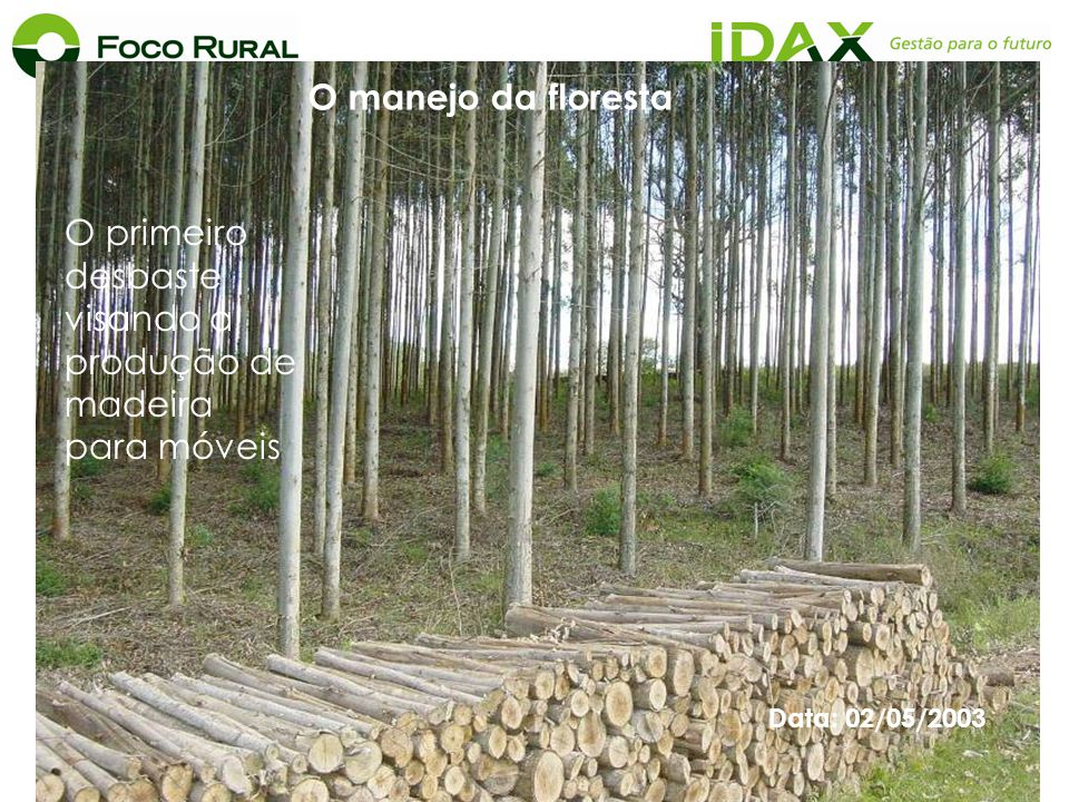 O primeiro desbaste visando a produção de madeira para móveis