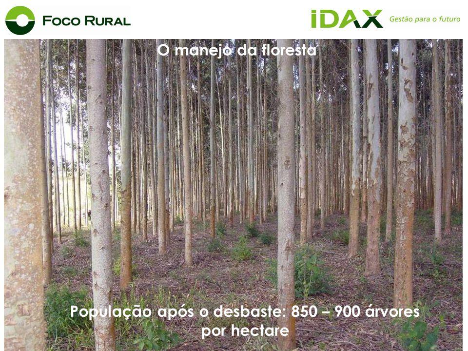 População após o desbaste: 850 – 900 árvores por hectare