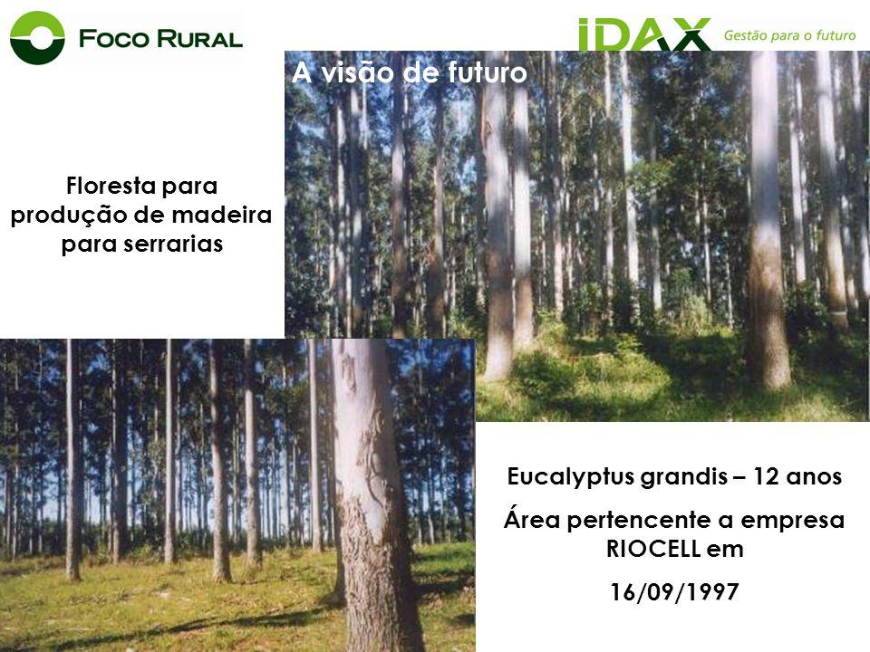 A visão de futuro Floresta para produção de madeira para serrarias