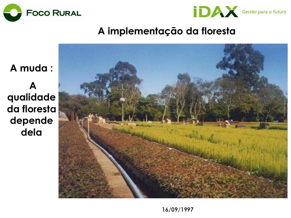 A implementação da floresta A qualidade da floresta depende dela
