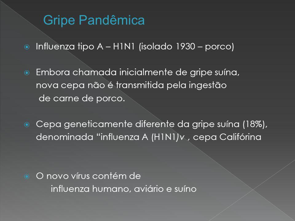 Gripe Pandêmica Influenza tipo A – H1N1 (isolado 1930 – porco)