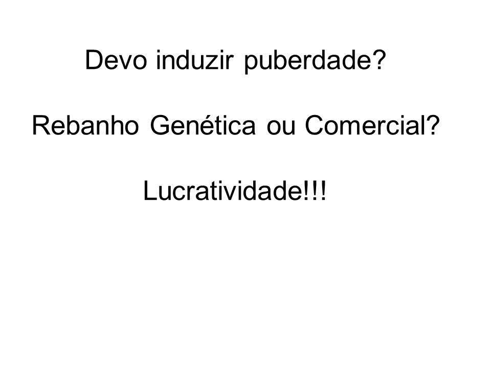 Devo induzir puberdade Rebanho Genética ou Comercial Lucratividade!!!