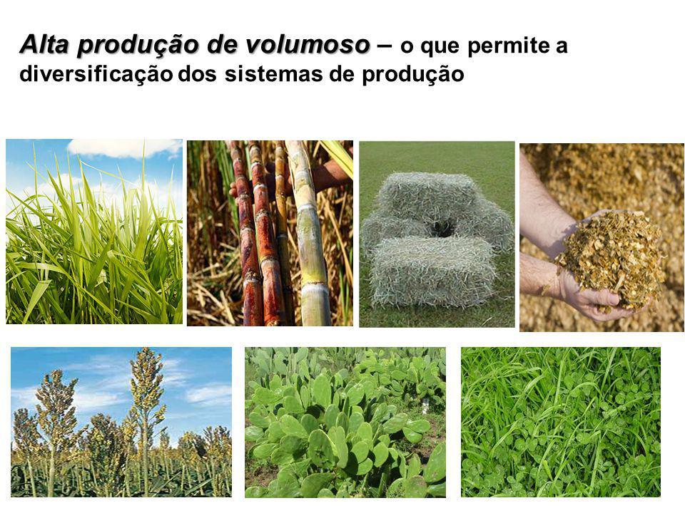 Alta produção de volumoso – o que permite a diversificação dos sistemas de produção