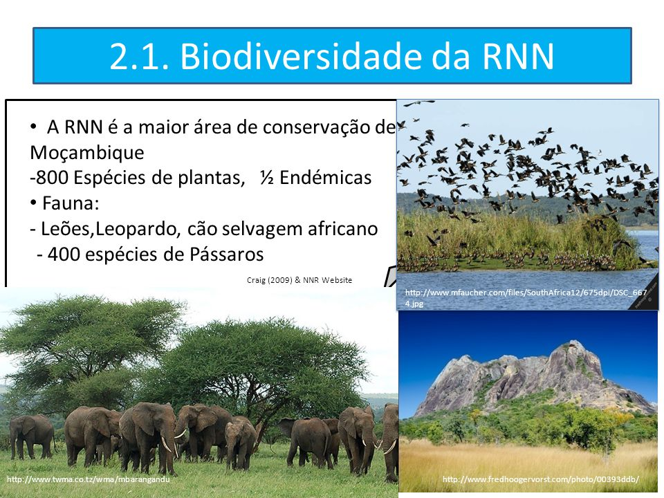 2.1. Biodiversidade da RNN A RNN é a maior área de conservação de Moçambique. -800 Espécies de plantas, ½ Endémicas.