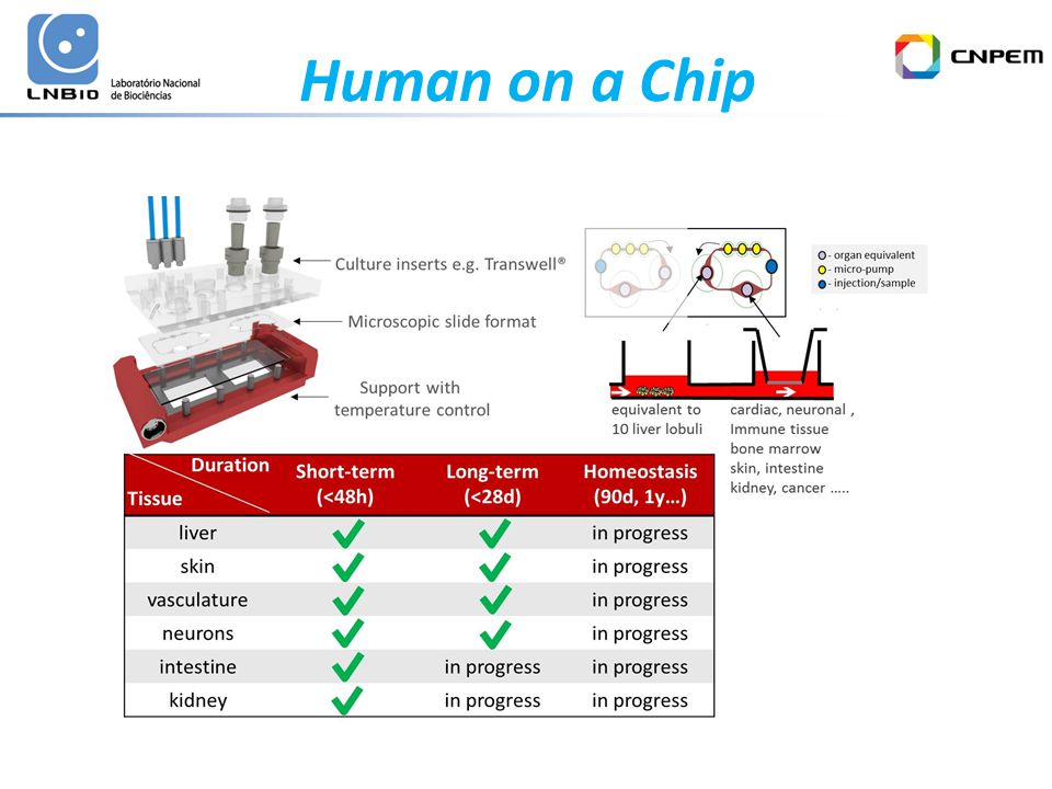 Human on a Chip
