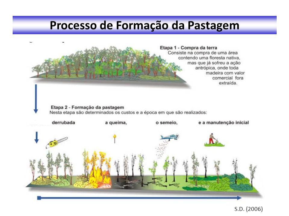 Processo de Formação da Pastagem