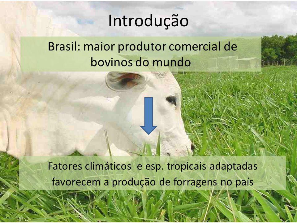 Brasil: maior produtor comercial de bovinos do mundo