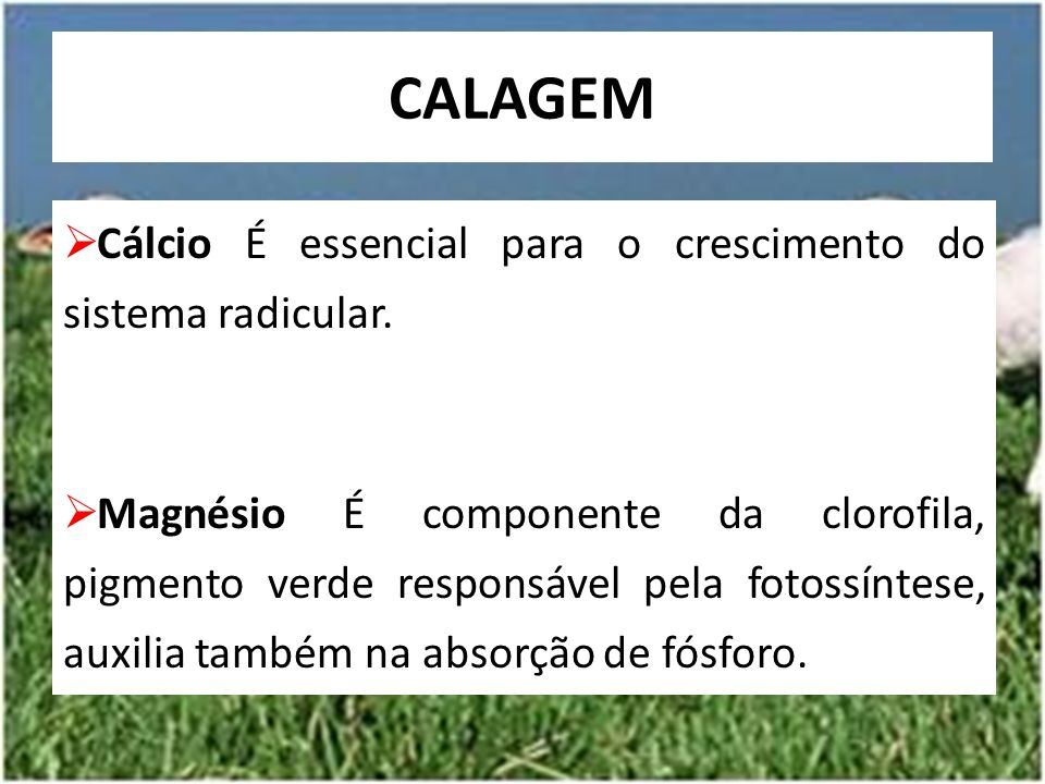 CALAGEM Cálcio É essencial para o crescimento do sistema radicular.
