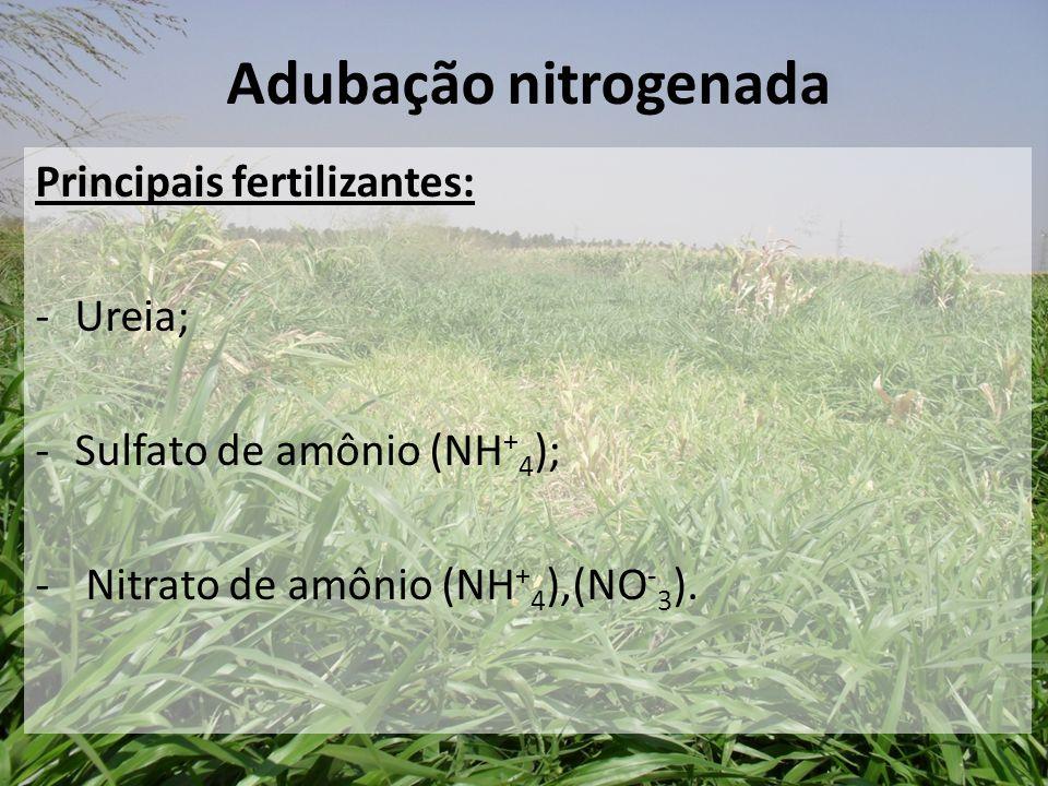 Adubação nitrogenada Principais fertilizantes: Ureia;