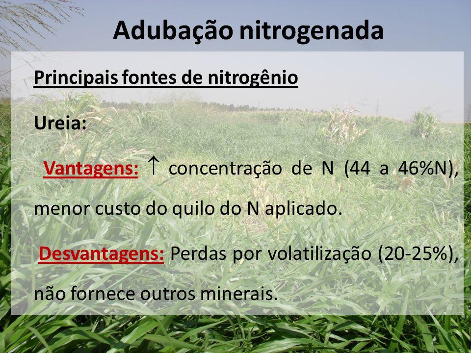 Adubação nitrogenada