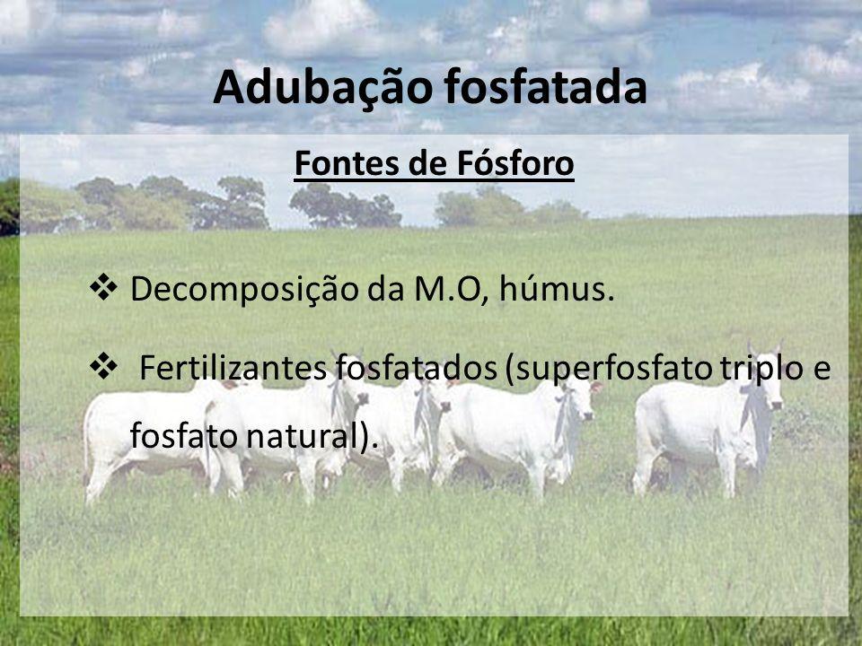 Adubação fosfatada Fontes de Fósforo Decomposição da M.O, húmus.