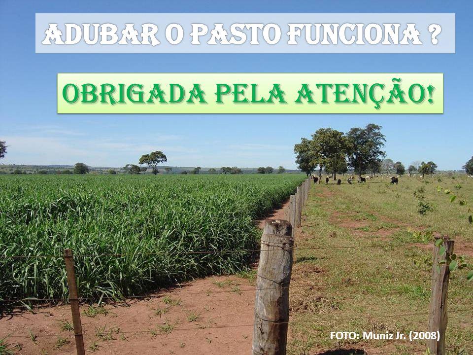 ADUBAR O PASTO FUNCIONA