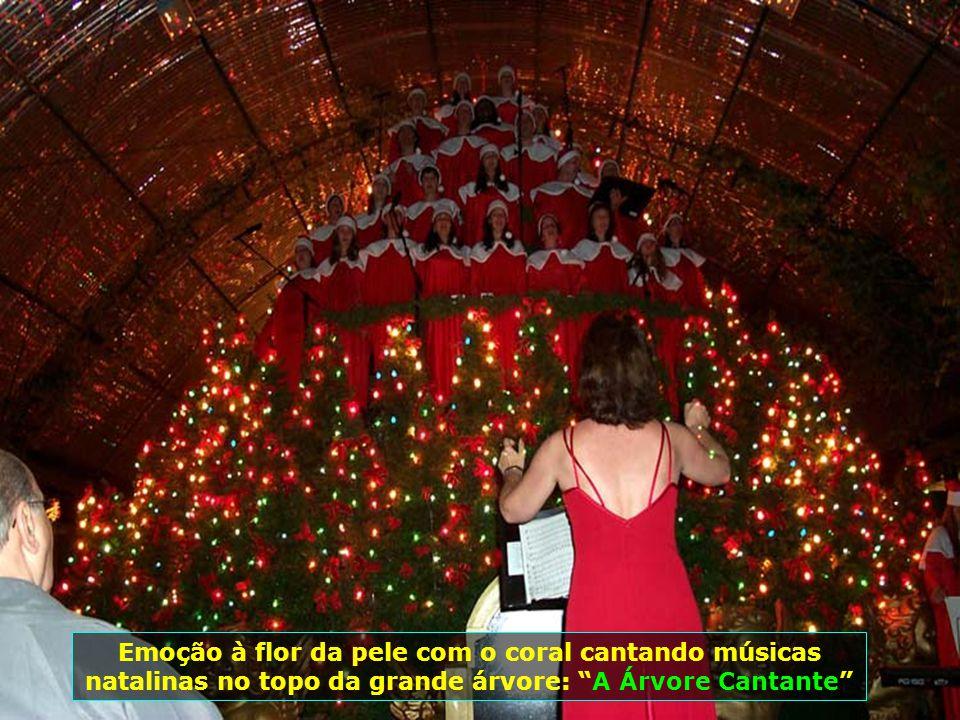 Emoção à flor da pele com o coral cantando músicas natalinas no topo da grande árvore: A Árvore Cantante