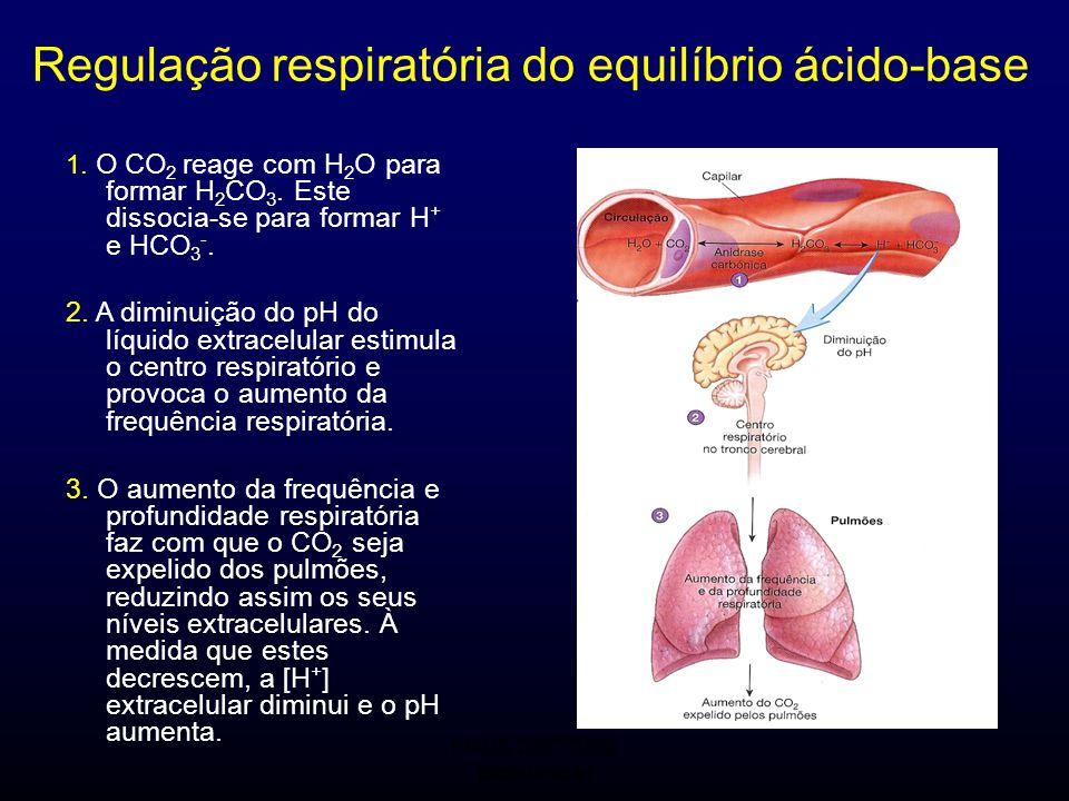 Regulação respiratória do equilíbrio ácido-base