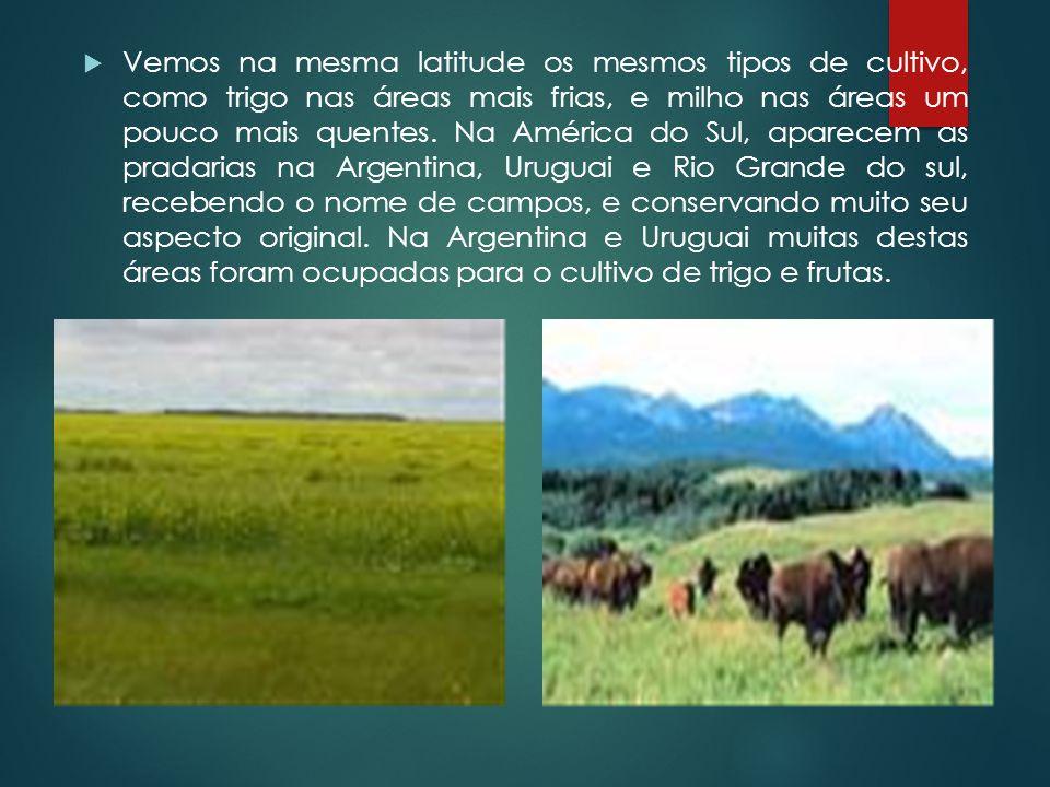Vemos na mesma latitude os mesmos tipos de cultivo, como trigo nas áreas mais frias, e milho nas áreas um pouco mais quentes.