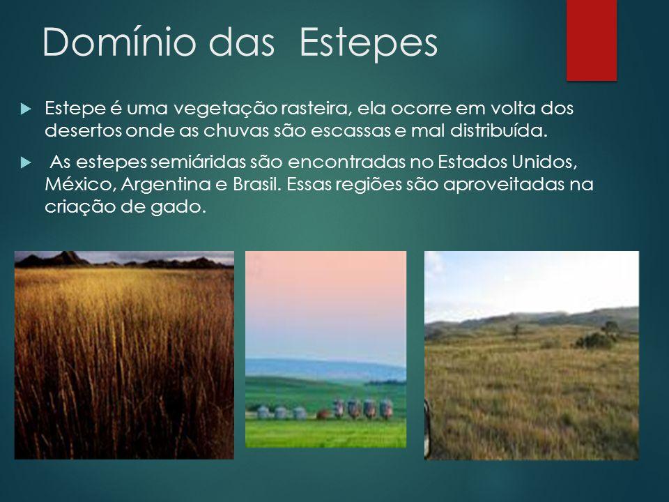 Domínio das Estepes Estepe é uma vegetação rasteira, ela ocorre em volta dos desertos onde as chuvas são escassas e mal distribuída.