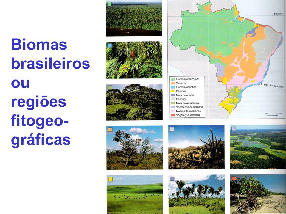 Biomas brasileiros ou regiões fitogeo-gráficas