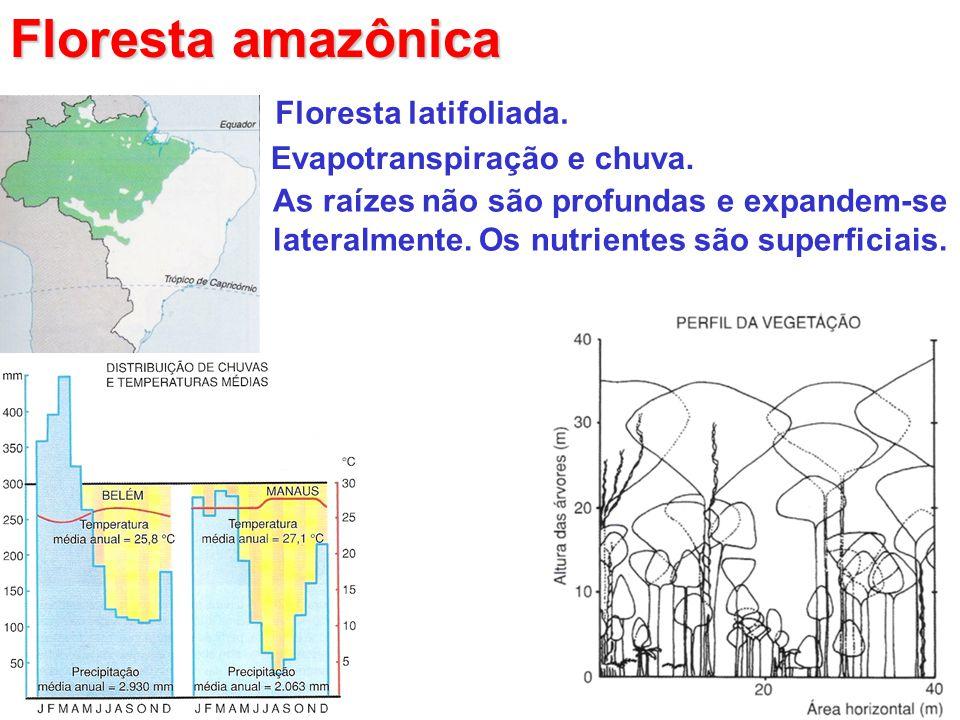 Floresta amazônica Floresta latifoliada. Evapotranspiração e chuva.