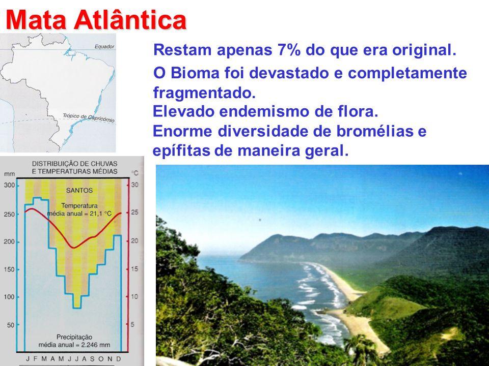 Mata Atlântica Restam apenas 7% do que era original.