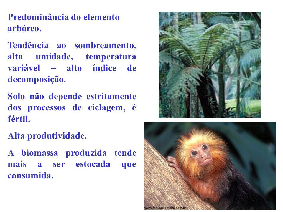 Predominância do elemento arbóreo.