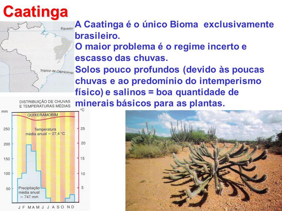 Caatinga A Caatinga é o único Bioma exclusivamente brasileiro.